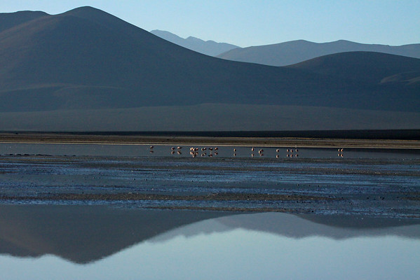 Flamingos preening upon the Salar Ascotan - with the reflection of the the silhouettes, of the Cordillera Andes beyond.