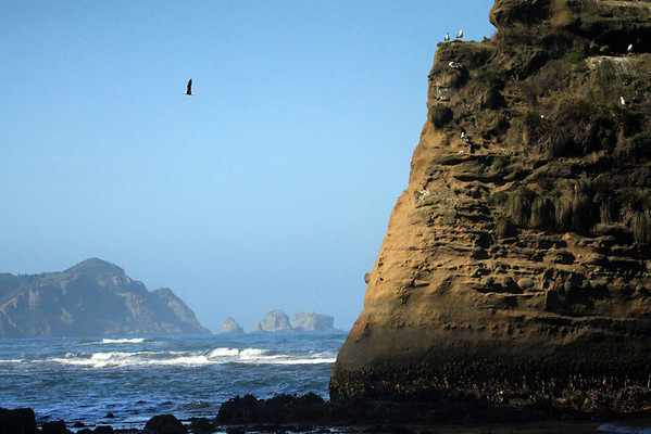 Beyond the morning sunlit sea stack, kelp gull in flight, and waves of southern Bahia Cucao - to the distal sea stacks, along Punta Pirulil - western coast of Chiloé Island.