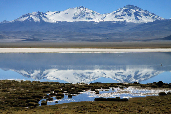 From the cushion plants and tussock grass shoreline - to the reflection of Nevado Tres Cruces, upon the endorheic Laguna Santa Rosa, with several flamingos feeding there upon.