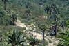 Chilean Wine Palm (Jubae chilensis) - Quisco cacti (Echinopsis chiloensis) - bloom stalks of the bromeliad (Greigia sphacelata) - vegetation of the Matorral ecoregion - Campana National Park - Valparaiso region - Coastal Mountains - central Chile.
