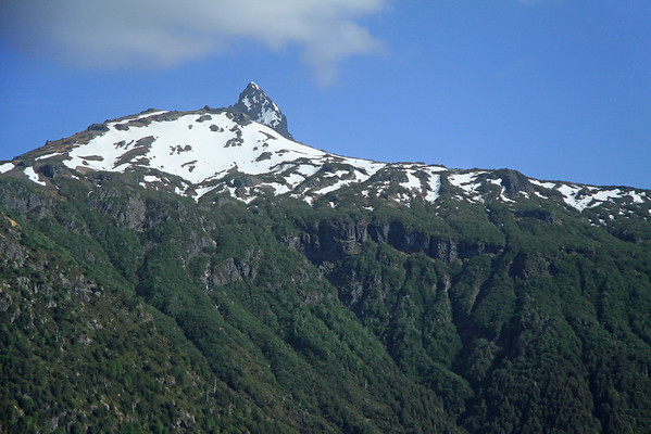 Southern Beech Trees (Nothofagus, genus), along the rocky and snow capped slope - to the distal peak of Cerro Quinquilil - Villarrica National Park, Puesco Sector (southeastern).