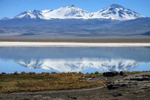 Reflection of Cerros Tres Cruces Norte (l), Central, and Sur (r), upon Laguna Santa Rosa, and the foraging flamingos - with the Salar Maricunga beyond.