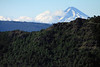 Beyond the Monkey Puzzle and southern beech trees along the slope and ridge of the Sierra de las Thermas - to the conical, glacial, and volcanic rock peak, of Volcan Llaima, a symmetrical stratovolcano, rising to about 10,253 ft. (3,125 m) in the Araucania region, of central Chile.