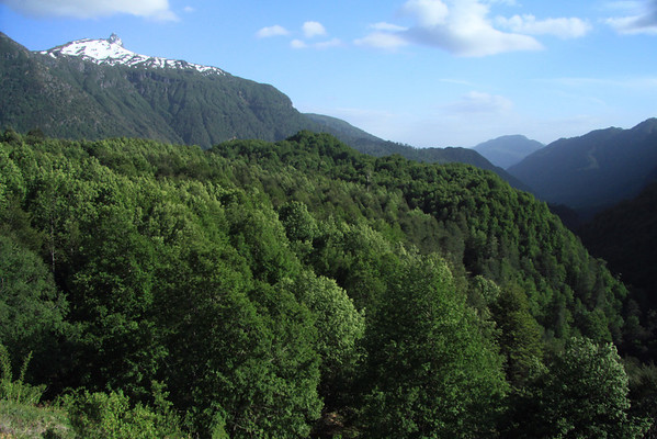 Across the mid-spring season vegetation of the Valdavian Temperate Forest - to the snow banks and beech trees along the ridge - then distal the peak of Cerro Quinquilil.