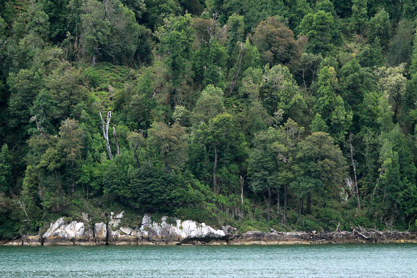 Across the Seno Queulat - to the igneous rock, displaying the tidal-line during the semi-diurnal flood tide (rising). - along the virgin forest of the Valdivian Temperate Rainforest ecoregion.