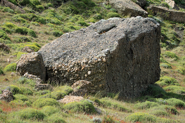 Conglomerate Rock - a sedimentary rock, consisting of individual clasts (that are rounded shape) within a finer-grained matrix, that has been fused together - these specimens  among the blooming cushion plants and seeding tussock grass.