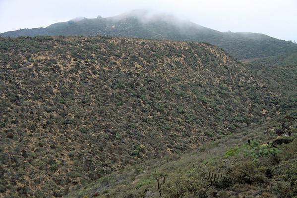 Camanchaca coastal fog - along the ridges and slopes, of the Cordillera Talinay - cloaked with scrub vegetation of the Matorral ecoregion.