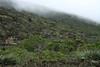 Lower slope of the Cordillera Talinay - among the coastal Camanchaca fog, and scrub vegetation (cactus, bromeliads, and shrubs).