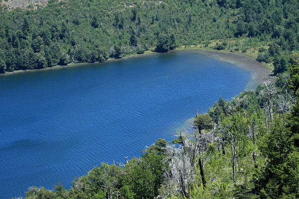 Western end of the glacial Laguna Malleco - among the vegetation of the Valdivian Temperate Forest ecoregion - Tolhuaca National Park.