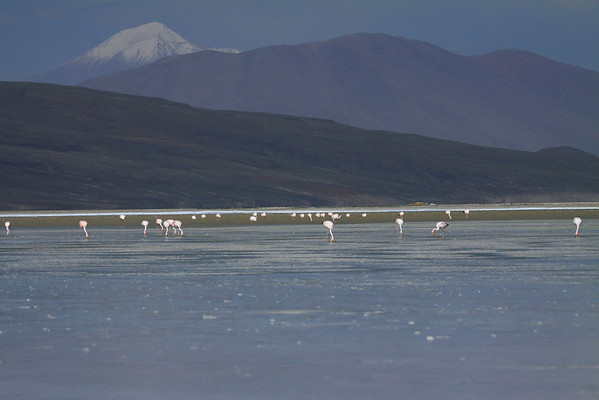 Flamingos feeding upon the northeastern Salar Ascotan - beyond the southern slope of Cerro  Chijliapichina - over Cerro Canchajapichina - to the distal snow-cloaked Cerro Coyumiche (also known as Cerro Tomasamil).