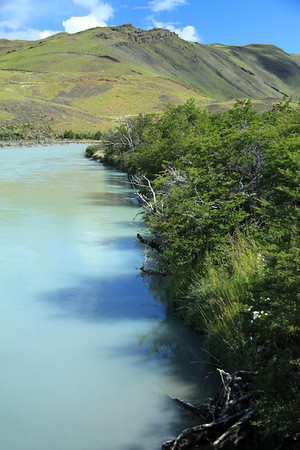 Along the bank of the Rio Paine - lined with southern beech trees.