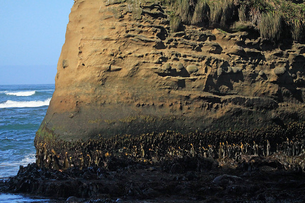 Brown kelp and tussock grass, upon the morning sunlit sea stack - with the waves upon Bahia Cucao beyond.