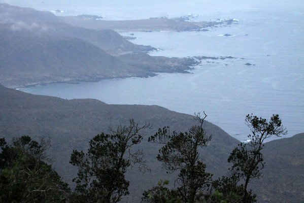 Punta Limari - from here along the forested ridge of the Cordillera Talinay - Bosque Fray Jorge National Park.