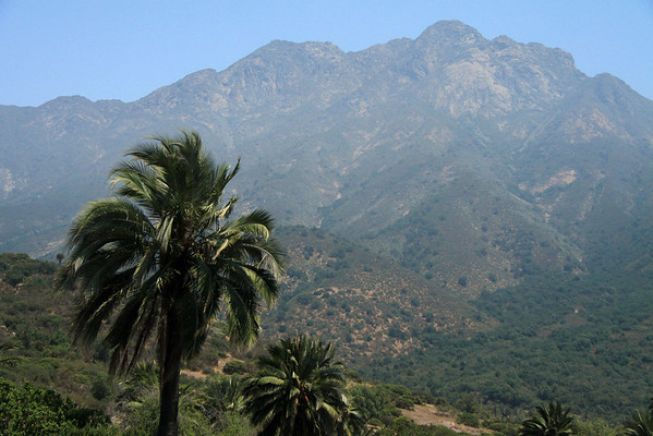 Cerro Campana (Bell Hill) - beyond the Chilean Wine Palms.