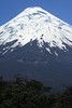 Over the tree tops - beyond the timberline, up the southeastern slope, to the glacial ice cap atop Volcan Osorno.