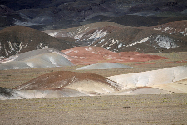 From the Salar Atacama, salt flat - up the alluvial fan slopes stained with minerals, among the xeric tussock grass, up in the high altitude habitat of the Puna Atacama - Loa province, Antofagasta region.