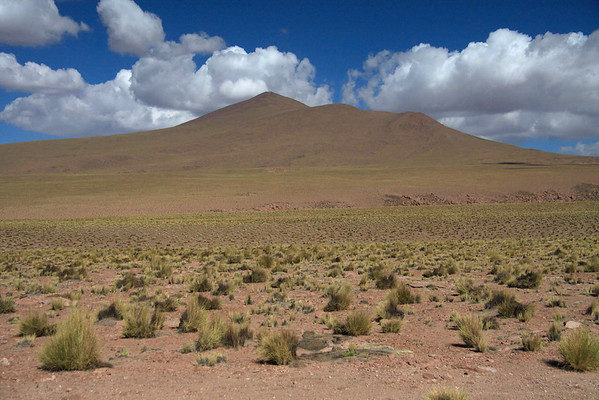 Up the steep slope amongst the tussock grasses, with the stratocumulus clouds above - Loa province - eastern Antofagasta region.
