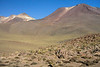 Igneous rock, tussock grass, and xeric shrubs with above the slopes ridges of Volcán Tatio - Loa province - northeastern Antofagasta region.