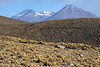 From the tussock grass and volcanic rock slopes - beyond to Volcán Colorado then Volcán Curiquinca - Loa province - northeastern Antofagasta region - with between a volcano in the Potosi department, the country of Bolovia.