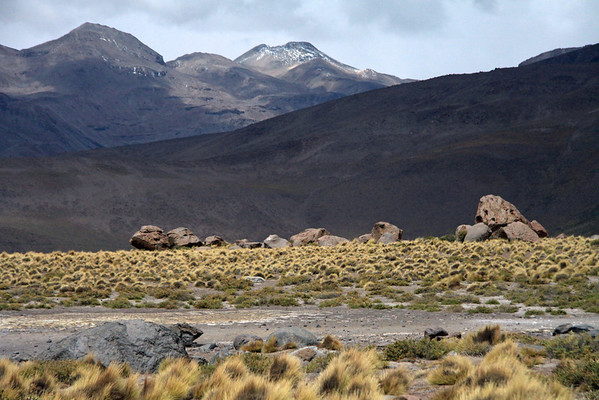Tatio Geyser Field - amongst the igneous rock boulders, tussock grass, xeric shrubs, and mid-summer season snow patches along the slopes above - Loa province - northeastern Antofagasta region.