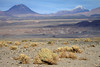 Xeric shrub vegetation in the Central Andean Dry Puna ecoregion, amongst the cobbles and pebbles - beyond to Volcán Lascar and Volcán Aguas Calientes - Loa province - eastern Antofagasta region.