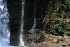 Laja Waterfalls - amongst the lithophytic moss, ferns, herbs, and shrubs - Biobío province and region - central Chile.