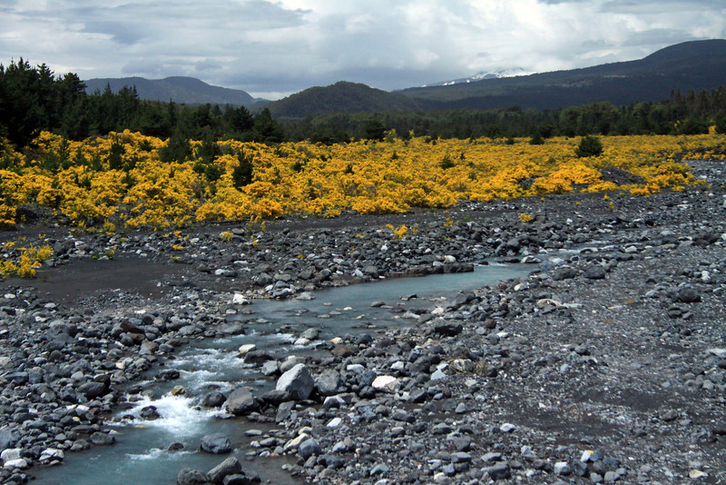 Rio Turbio - to the distal snow covered slope of Volcan Quetrupillan - Araucania region.