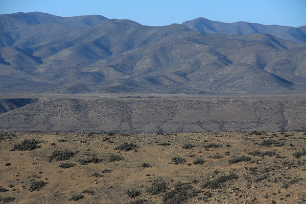 Cactus and xeric scrub vegetation in the Chilean Matorral ecoregion - here along the slopes along the Río Huasco and Sierra Coastal - southwestern Atacama region.