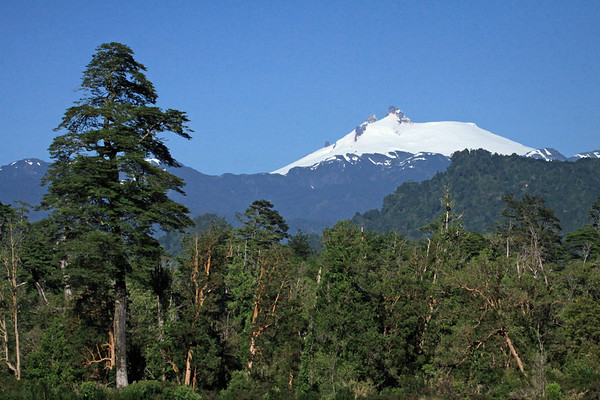 Beyond the virgin forest of the Valdivian Temperate Rainforest ecoregion - to the glacial capped Volcan Melimoyu, rising to about 8,005 ft. (2,440 m) - northern Aisén province and region.