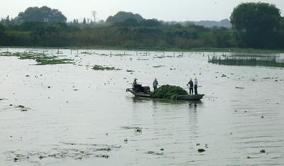 Canal on the way to Zhou-zhuang - A Watertown near Shanghai