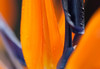 A bird of paradise flower glows in the morning light, Wangfujing Street (Dongcheng, Beijing, CN - 10/21/13, 6:21:01 PM)