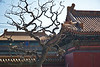 Ancient China is well represented in Beijing. Here, an old tree and a Qing Dynasty gate stand together in Jingshan Park. [Jingshan Gongyuan; Beijing, P.R.C.]