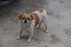 A dog in Anyang's Xiaotun Village poses for a photo. (Anyang Shi, Henan Sheng, CN - 07/15/16, 1:03:30 PM)