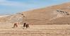 Horses graze on the Inner Mongolian steppe. (Darhan Muminggan, Baotou, Nei Menggu, CN - 11/08/13, 1:06:48 PM)