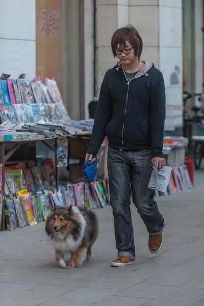 A young man walks his dog down a Dongdan Avenue sidewalk. (Dongcheng, Beijing, CN - 11/14/13, 4:26:36 PM)