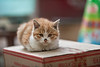 A brave kitten relaxes on a boxtop on a street that hosts the sale of live animals. (Beiguan Qu, Anyang Shi, Henan Sheng, CN - 10/25/16, 3:23:54 PM)
