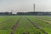 (Wenxian, Jiaozuo, Henan, CN - 11/03/13, 1:46:47 PM)