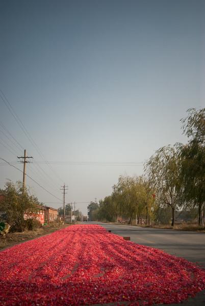 Red Carpet (Wenxian, Jiaozuo, Henan, CN - 11/03/13, 1:45:21 PM)
