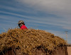 A hay truck in the grasslands (Darhan Muminggan, Baotou, Inner Mongolia, CN - 11/08/13, 12:54:25 PM)