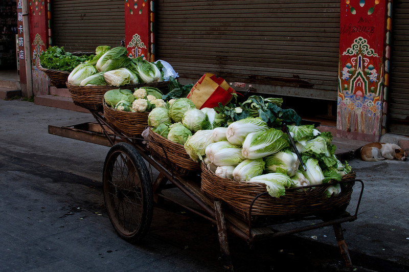 Chinese cabbage for sale