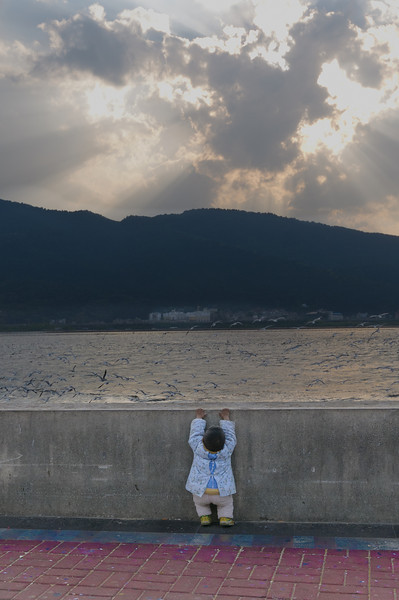 A child tries to look over the barrier at the flurry of migratory seagulls at Dianchi Lake (Xishan, Kunming, Yunnan, CN - 03/19/13, 5:56:00 PM)