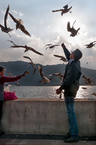 Feeding migratory seagulls on a beautiful spring day at Dianchi Lake (Xishan, Kunming, Yunnan, CN - 03/19/13, 5:35:30 PM)