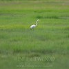 Crane and Salt Marshes