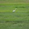 Crane and Salt Marshes