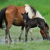 Little Freedom and Foal
