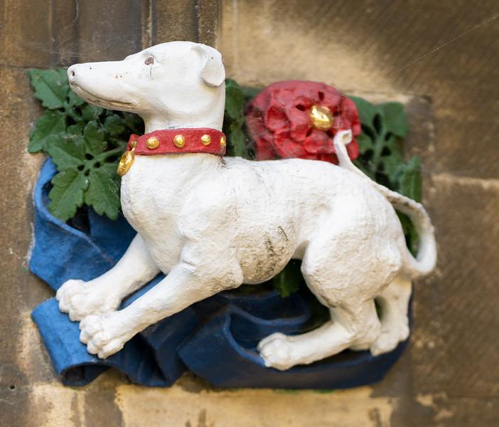 Dog in Christ's College, Cambridge (Sep 2021)