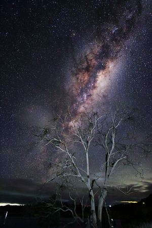 Old Dead Tree under the Milky Way