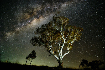 Old Gum Tree under the Milky Way
