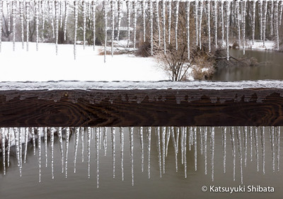 GC-117: Icicle on the Foot Bridge The Alton Baker Canoe Canal at Cuthbert Eugene, Oregon February 2014