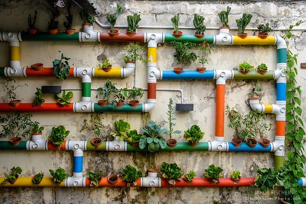 Urban Gardening, Malacca, Malaysia